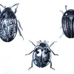 Beetles-Scraper-Board-Leonie-Norton