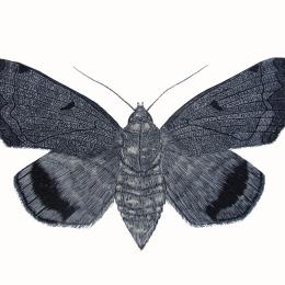 Moth-Scraper-Board-Leonie-Norton