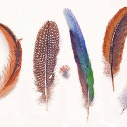 Feathers - leonie norton
